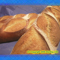FRESH BAKED NYC Oven Baked Italian Bread 10 loaves